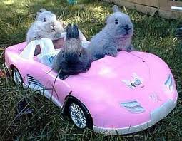 Look! It's three bunnies in a little car!!