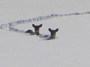 And I hate having to climb over the deers that are stuck in the snow.