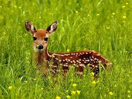 """""""Probably not."""" -- this deer"""