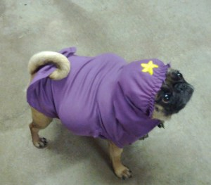 This image of a pug dressed as Lumpy Space Princess came up during an image search, and I couldn't not use it, you know?